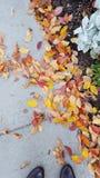 Fogli di autunno sul marciapiede Immagine Stock Libera da Diritti