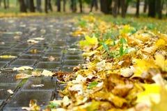 Fogli di autunno sul passaggio pedonale Fotografie Stock