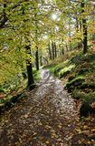 Fogli di autunno sul percorso 338 di Watkins Immagine Stock Libera da Diritti