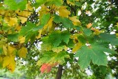 Fogli di autunno sull'albero Fotografia Stock