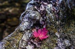 Fogli di autunno sull'albero Fotografia Stock Libera da Diritti