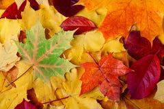 Fogli di autunno sulla terra fotografie stock libere da diritti