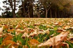 Fogli di autunno sulla terra immagine stock libera da diritti
