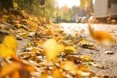 Fogli di autunno sulla via fotografia stock
