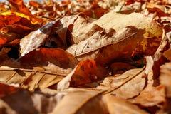 Fogli di autunno variopinti Fotografia Stock Libera da Diritti