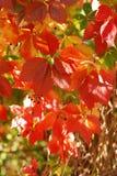 Fogli di autunno variopinti Fotografie Stock Libere da Diritti