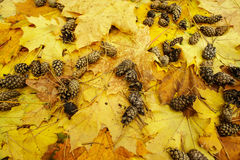 Fogli di autunno variopinti Immagini Stock