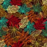 Fogli di autunno variopinti Immagini Stock Libere da Diritti