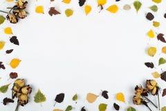 Fogli di autunno variopinti Copi lo spazio per testo Vista superiore Immagini Stock Libere da Diritti