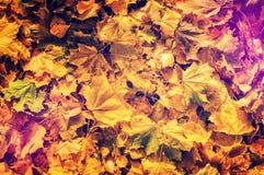 Fogli di autunno variopinti Effetto di Instagram fotografie stock
