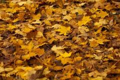 Fogli di autunno variopinti Fogli dell'arancio di autunno del gruppo della priorità bassa esterno Fotografia Stock Libera da Diritti
