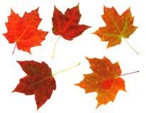 Fogli di autunno variopinti isolati Fotografia Stock Libera da Diritti