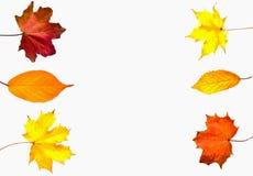 Fogli di autunno variopinti isolati su priorità bassa bianca Immagini Stock Libere da Diritti