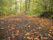 fogli di autunno variopinti nella sosta fotografia stock