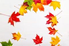 Fogli di autunno variopinti Priorità bassa astratta di caduta Marple di caduta Immagini Stock Libere da Diritti