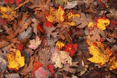 Fogli di autunno variopinti sulla terra Fotografie Stock