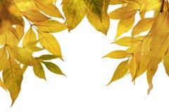 Fogli di autunno. Vista orizzontale. Immagine Stock Libera da Diritti