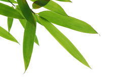 Fogli di bambù Immagini Stock