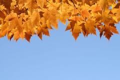Fogli di caduta con cielo blu Fotografia Stock