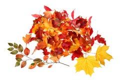 Fogli di caduta di autunno Immagine Stock Libera da Diritti