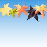 Fogli di caduta di autunno Immagini Stock Libere da Diritti