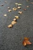 Fogli di caduta di autunno Immagine Stock