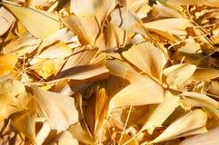 Fogli di caduta per una priorità bassa di autunno Immagine Stock Libera da Diritti