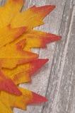 Fogli di caduta su legno rustico Fotografia Stock
