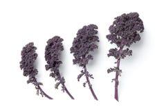 Fogli di cavolo viola fotografie stock