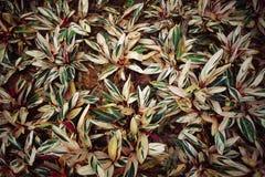 fogli di colore Fotografia Stock