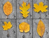 fogli di colore giallo Fotografie Stock Libere da Diritti