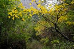 Fogli di colore giallo Immagini Stock