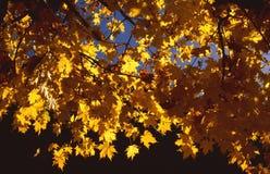 Fogli di colore giallo Fotografie Stock