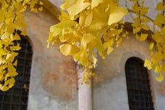 Fogli di colore giallo immagine stock