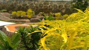 Fogli di colore giallo Fotografia Stock