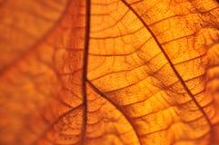 Fogli di colore giallo di autunno Immagine Stock Libera da Diritti