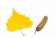 Fogli di colore giallo ed orecchini della betulla fotografia stock libera da diritti
