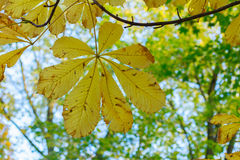 Fogli di colore giallo nella sosta di autunno Fotografie Stock Libere da Diritti