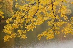 Fogli di colore giallo sopra il lago Immagini Stock