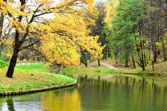 Fogli di colore giallo in sosta d'autunno Fotografia Stock