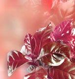 Fogli di colore rosso Fotografie Stock