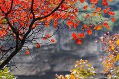 Fogli di colore rosso Fotografia Stock Libera da Diritti