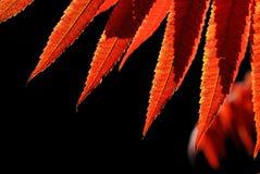 Fogli di colore rosso Immagini Stock Libere da Diritti