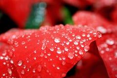 Fogli di colore rosso Fotografia Stock