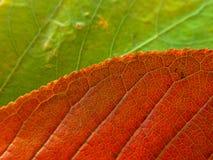 Fogli di colore rosso e verdi Fotografia Stock Libera da Diritti
