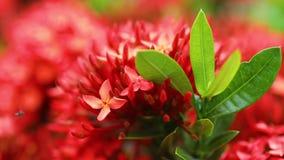 Fogli di colore rosso e verdi archivi video