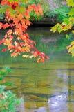 Fogli di colore rosso sopra un fiume Immagine Stock Libera da Diritti