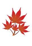 Fogli di colore rosso - vettore Fotografia Stock
