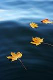 Fogli di galleggiamento di autunno Immagini Stock