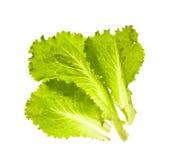 Fogli di insalata fresca su una priorità bassa bianca Immagini Stock Libere da Diritti